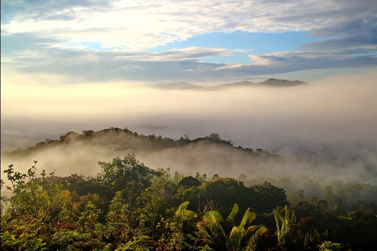 A view across the forests of Borneo.
