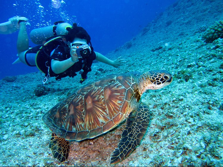 Diving with marine turtles in Cancun, Mexico.