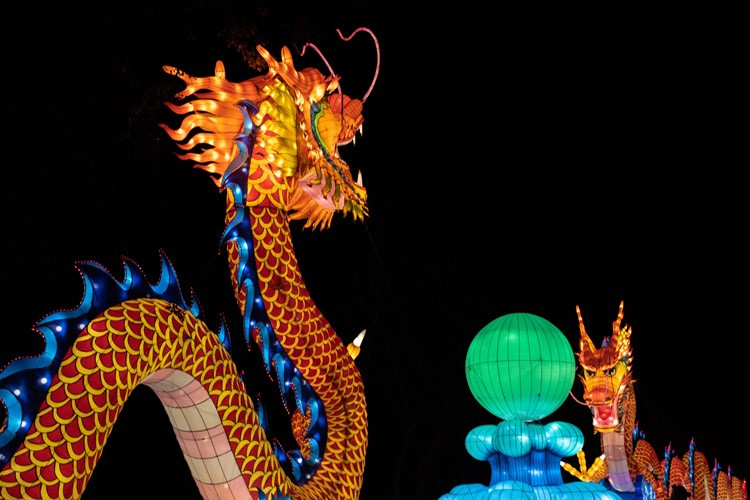 Brightly lit dragons for Chinese New Year