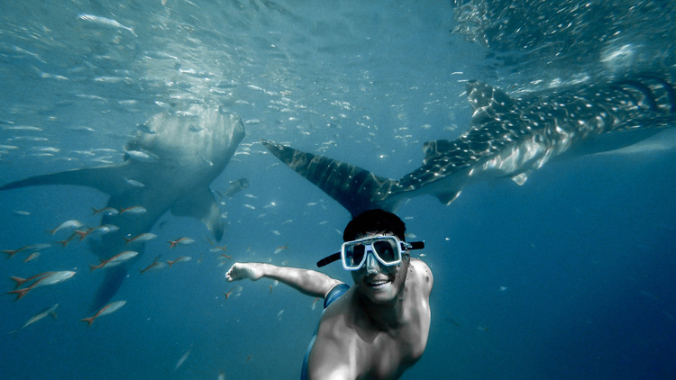 A man swimming with whale sharks in Cancun, Mexico.